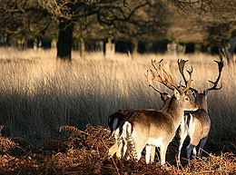 Richmond Park a rat run for 80% of cars